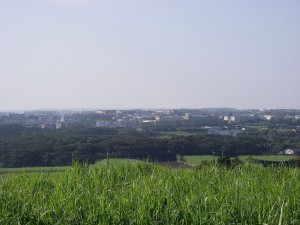 中種子町の市街地