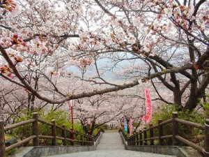 大法師公園 - 富士川町