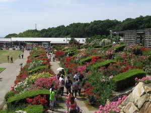 花フェスタ記念公園 - 可児市
