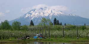 りんご畑と岩木山 - 青森県