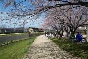 喜瀬川の桜並木 - 播磨町