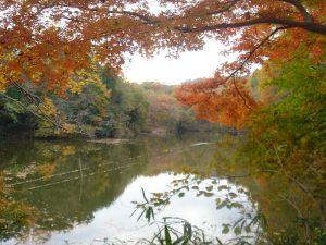 震生湖 - 中井町