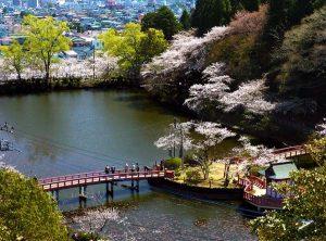 茂原公園の桜 - 茂原市